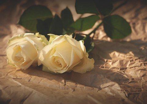 white-roses-1082126__340[1]